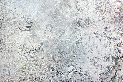 frost on glass - p1169m2108464 by Tytia Habing