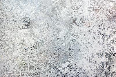 Eisblumen - p1169m2108464 von Tytia Habing