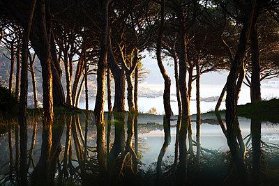 Spain, Cala S'Alguer, Costa Brava, trees reflecting in water at dusk - p300m2083258 von David Santiago Garcia