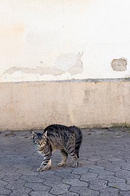 Erschrockene Katze - p739m1066137 von Baertels