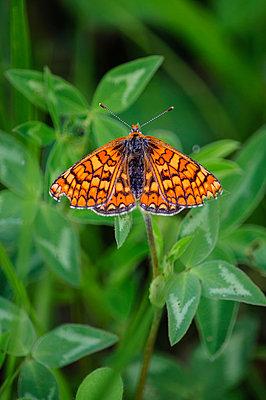 Butterfly - p1412m1575002 by Svetlana Shemeleva