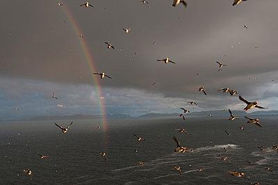 Möwen unter dem Regenbogen - p816m1032252 von Nævra, Arne