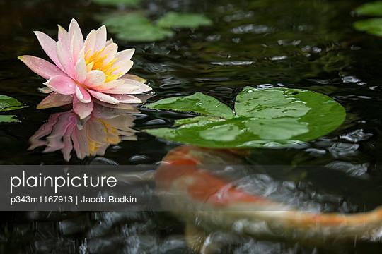 p343m1167913 von Jacob Bodkin