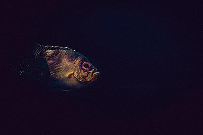 Goldener Fisch - p1088m1034550 von Martin Benner