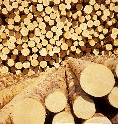 Pile of wood - p7090022 by Axel Kohlhase