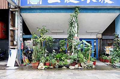 A great number of potted plants in front of building  - p237m1286515 by Thordis Rüggeberg