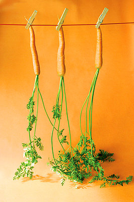 Carrots in a row - p954m777539 by Heidi Mayer