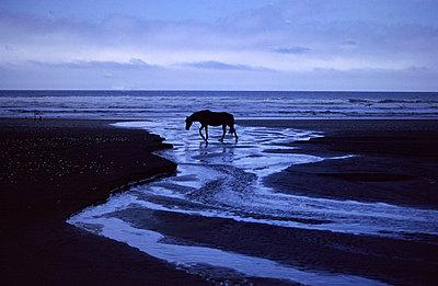 Pferd am Strand - p9791670 von Schickhofer