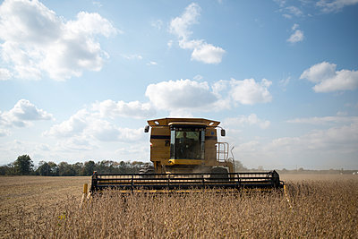 Harvesting Soybeans - p1169m1463474 by Tytia Habing