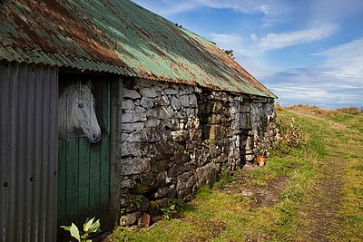 A Horse's Head Peeks Out A Stable Door; Argyll Scotland - p442m700409 by John Short