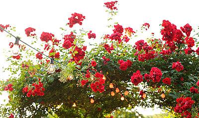 Rosentor I - p606m822708 von Iris Friedrich