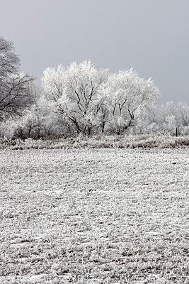 Snow covered on field against sky - p1166m1532231 by Cavan Social