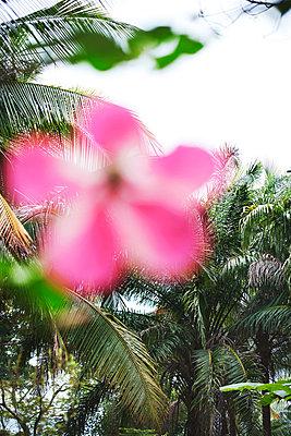 Inselblume - p1167m956578 von Maria Schiffer