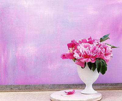 A bouquet of peonies in a white vase against a purple background - p1183m999485 by Braas, Nele