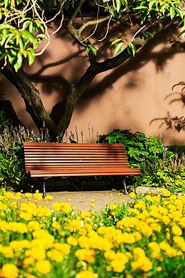 Bench under tree - p312m2079070 by Kentaroo Tryman