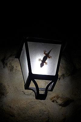 Gecko im Licht - p415m698229 von Tanja Luther