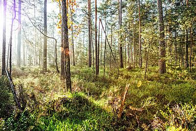 Wald - p947m945794 von Cristopher Civitillo