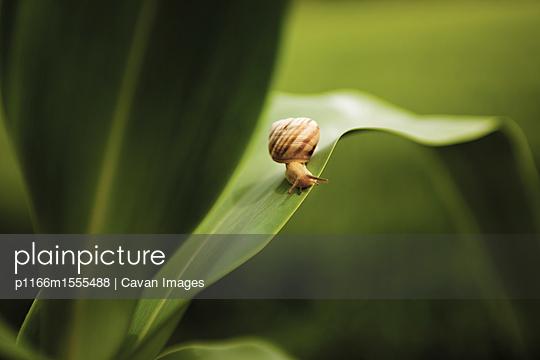 p1166m1555488 von Cavan Images