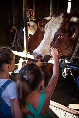 Two girls in cow stable - p1007m2219986 by Tilby Vattard