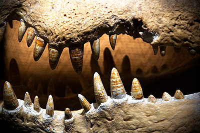 Crocodile teeth. - p343m1554769 by Ron Koeberer
