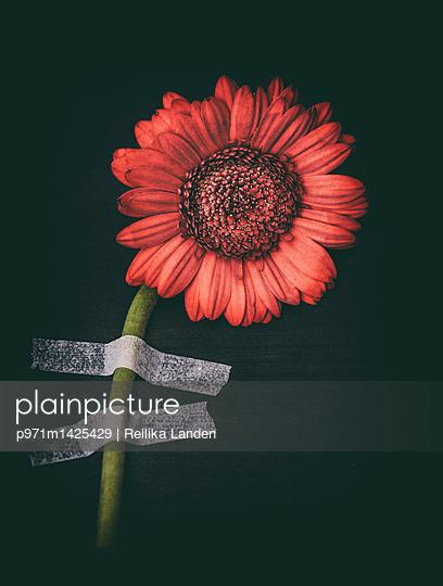 Taped flower - p971m1425429 by Reilika Landen