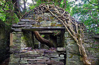 Derelict Stone Cottage in Woodland - p1072m993527 by chinch gryniewicz