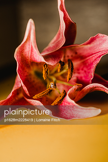 Red Lily - p1628m2228419 by Lorraine Fitch