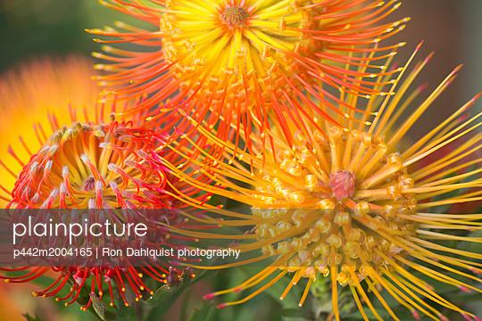 p442m2004165 von Ron Dahlquist photography