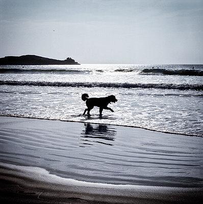 Seehund - p545m1072958 von Ulf Philipowski