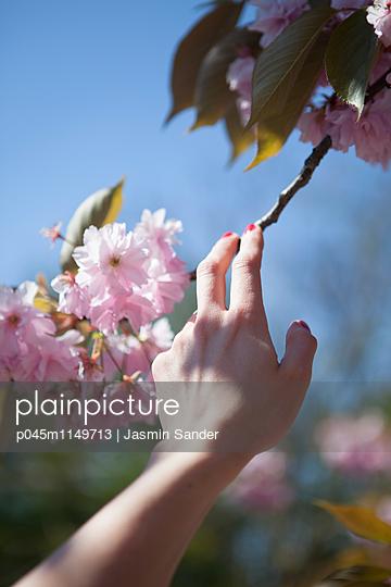 Kirschblüten-Romantik - p045m1149713 von Jasmin Sander