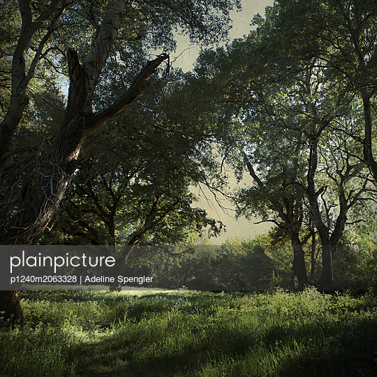 Deciduous forest in summer - p1240m2063328 by Adeline Spengler