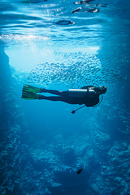 Young woman scuba diving underwater among school of fish, Vava'u, Tonga, Pacific Ocean - p1023m2024459 by Martin Barraud