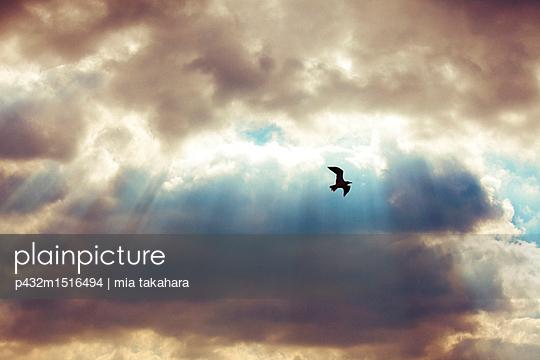 Schwarzer Vogel am Himmel - p432m1516494 von mia takahara