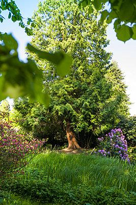 Der Baum - p1510m2099014 von Ingrid Amenda