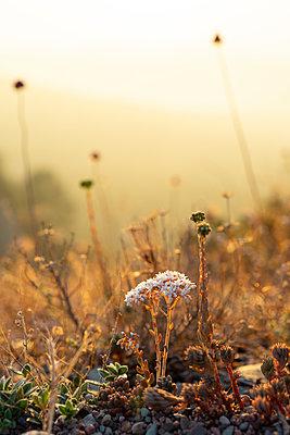 Spain, Catalonia, Grasses on Montcau at sunset - p300m2012324 von VITTA GALLERY