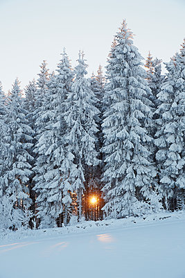 Coniferous forest in winter - p312m1470288 by Jan  Tove