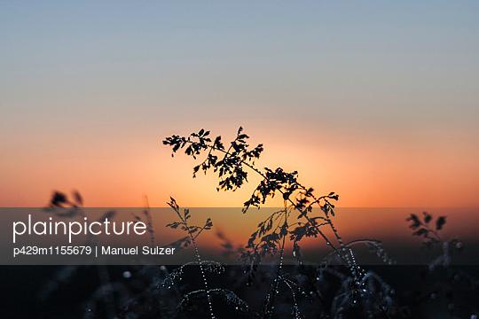 p429m1155679 von Manuel Sulzer