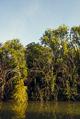 Trees and branches on the river bank - p1312m2263115 by Axel Killian