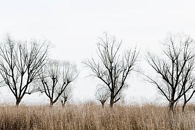 Kahle Bäume im Schilf - p1383m1333024 von Wolfgang Steiner