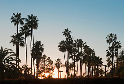 Silhouette of palm trees at sunset - p429m665492f by Markus Henttonen