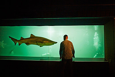 Man watching shark in aquarium - p429m802506 by Image Source