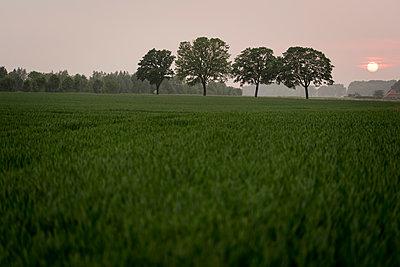 Landschaft am Niederrhein - p220m1158923 von Kai Jabs