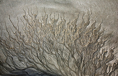 In the sand - p6280316 by Franco Cozzo