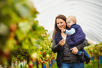 An adult woman and a toddler, a mother and son in a polytunnel among soft fruit bushes picking autumn raspberries.  - p1100m1522430 by Mint Images