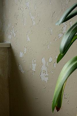 Abgeblätterter Wandputz im Chateau Vellexon - p335m1048324 von Andreas Körner