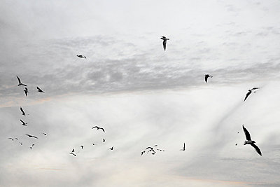 Seagulls - p4500558 by Hanka Steidle