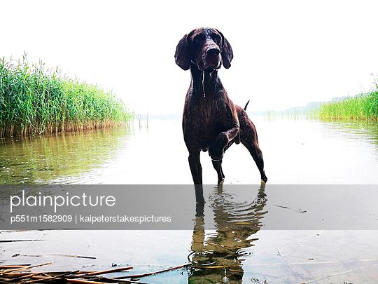 Hund am See - p551m1582909 von Kai Peters