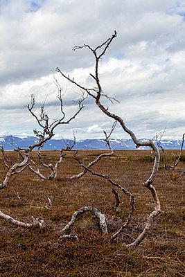 Tote Bäume in einer Steppenlandschaft - p1168m2007772 von Thomas Günther