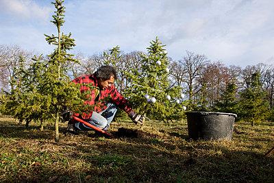 Der eigene Weihnachtsbaum - p1231m1051020 von Iris Loonen