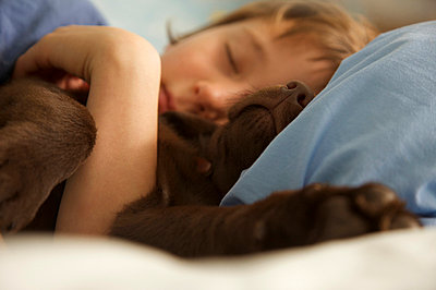 Boy and chocolate lab - p6690246 by Jutta Klee photography